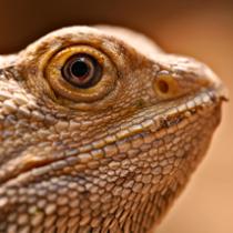 exotic-reptiles
