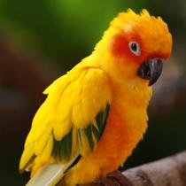 exotic-birds