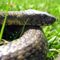 reptiles03